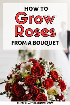 Keep your bouquet forever! Here are the steps to root your own cut flowers to grow into a rose bush! HOW TO GROW YOUR OWN ROSES!!! Rose Propagation from Cut Flowers | Rose Propagation |