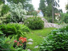 Verdant garden / Vehreä puutarha