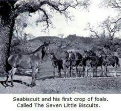 Seabiscut