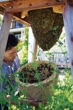 The Sun Hive: experimental Natural Beekeeping