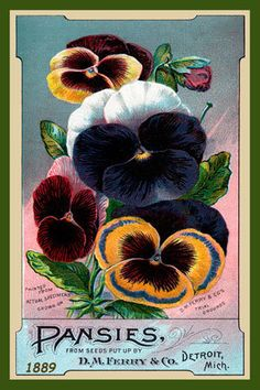 "detroitlib: "" View of an advertising card for D. Ferry & Co. Printed on front: ""Pansies from seeds put up by D. Ferry & Co. Vintage Labels, Vintage Ephemera, Vintage Cards, Vintage Postcards, Vintage Images, Disney Collectibles, Vintage Seed Packets, Seed Packaging, Seed Catalogs"