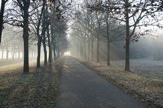 84. Out Cold by Mixmax3d.deviantart.com on @DeviantArt #challenge #cold #photography #mixmax3d #naturephotography #100themeschallenge