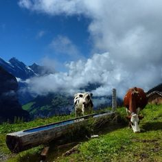 Jungfrau railway,a mountain railway partly build into Eiger Mountain. Wengen Switzerland, Hill Station, Swiss Alps, Future Travel, Travel Photography, Wildlife, Around The Worlds, Adventure, Zurich