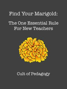 A must read for new teachers and a GREAT reminder to established teachers - Find Your Marigold: The One Essential Rule for New Teachers Cult of Pedagogy Student Teacher, Teacher Tools, Teacher Hacks, Teacher Resources, Teachers Toolbox, Teacher Stuff, Art Teacher Quotes, Teacher Survival, Teacher Binder