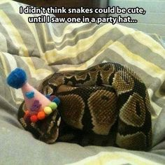 AWWWWW! but... when u think its a snake... its confuzzling. But it's just so caw-YOOT
