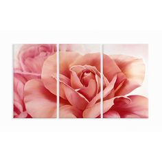 Home Décor Pretty Flower Triptych 3 Piece Painting Print Set