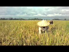 Just push play!/video clip! How rice is made