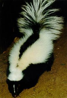 skunked...hate to raise a stink...but they are darn cute and very specially designed.
