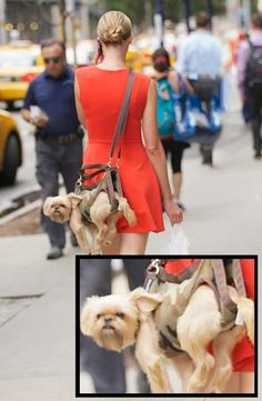 7 NON-CHIHUAHUAS That Will Bring the Pets in Purses Trend Back