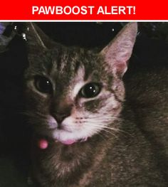 Please spread the word! Nala was last seen in Columbia, MD 21045.  Description: Female. 2 yrs old. Grey, Black, White, Brown Striped Tabby. Not spayed. Friendly but may be very afraid. Healthy but has small hernia at belly button site. No collar or chip.  Nearest Address: Near Quiet Hours Columbia, Md