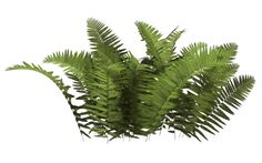 Fern 07 by wolverine041269