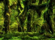 The Amazing Hoh by Aman Anuraj on 500px Hoh Rain Forest