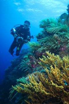 Top 5 Dive Spots in Malaysia