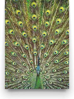 Deze prachtige blauwgroene peacock tuinposter van Made on Friday geeft je tuin een chique en warme uitstraling. Peacock, Modern Design, Bird, Animals, Shabby Chic, Animales, Animaux, Peacock Bird, Contemporary Design