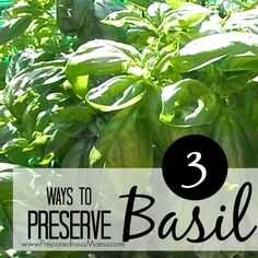 3 simple ways to preserve basil after the harvest. Learn to make basil & olive oil cubes for quick saute, salt dried basil, and get dehydrating instructions Fresh Basil, Fresh Herbs, Food Storage, Preserving Basil, Canning Vegetables, Cooking Ingredients, Grow Your Own Food, Growing Herbs, Hacks