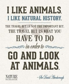 """""""I like animals. I like natural history. The travel bit is not the important bit. The travel bit is what you have to do in order to go and look at animals"""" - Sir David Attenborough Natural World, Natural History, David Attenborough Quotes, Nature Girl Names, Cool Words, Wise Words, Africa Quotes, Natural Curiosities, Nature Quotes"""
