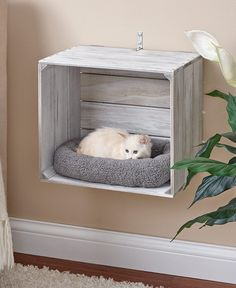 Wall-Mounted Cat Crate BedsYou can find Pet beds and more on our Wall-Mounted Cat Crate Beds Animal Room, Animal Decor, Animal House, Cat Crate, Crate Bed, Bed On Crates, Crates On Wall, Crate Nightstand, Crate Table