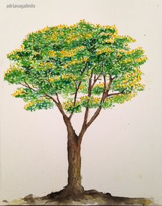 Copyright by Adriana Galindo - Sibipiruna, árvore 19, aquarela / Brazilian tree, 19, watercolor, 40treesprojetc, Adriana Galindo
