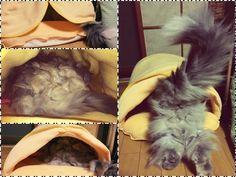 愛猫さくら姫 SHOOP+FACTORY(シュープ・ファクトリー)@オーナーブログ-36ページ目