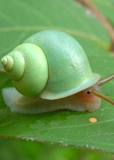 snail in green shell