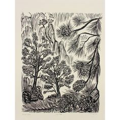 Pinion Pine Tree Original Woodblock Print Forest Mountain Landscape... (€215) ❤ liked on Polyvore featuring home, home decor, wall art, forest wall art, tree wall art, ink drawing, landscaping pine trees and blossom tree