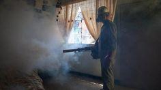 Zika-Blog: UN-Experte warnt: Welt noch immer schlecht auf Zika vorbereitet - Augsburger Allgemeine