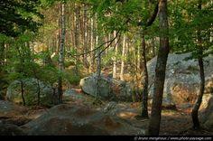 Fontainebleau : chênes et bouleaux