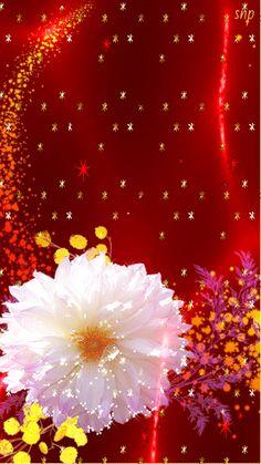 New Wall Paper Flores Animadas Ideas Beautiful Flowers Images, Beautiful Bouquet Of Flowers, Beautiful Flowers Wallpapers, Beautiful Gif, Flower Images, Beautiful Roses, Flower Phone Wallpaper, Cellphone Wallpaper, Coeur Gif