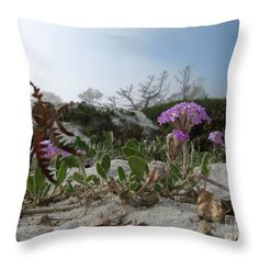 A pink sand verbena blooms on the sand dunes above Carmel beach. Image by James B. Toy. The pillow is by Pixels.com and is available in several sizes.