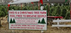 Silveyville Christmas Tree Farm in Dixon CA