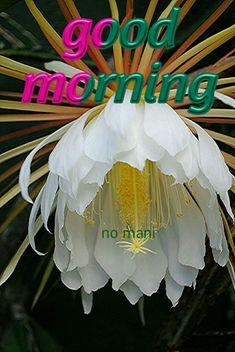 good morning no mani Good Morning World, Good Morning Wishes, Good Morning Images, Good Morning Flowers Quotes, Olympic Gymnastics, Dil Se, Beautiful Birds, Mornings, Thoughts