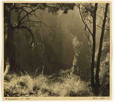 Olive COTTON Australia 1911 – 2003 Orchestration in light 1937