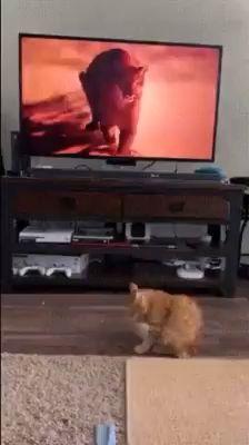 hi cat Run away Funny Animal Memes, Funny Animal Pictures, Cute Funny Animals, Cute Baby Animals, Funny Cute, Cute Cats, Animal Humor, Funny Gifs, Wild Animals