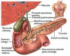 Calendula Benefits & Uses for Skin, Insect Bites, Anti-Cancer & More - Nedette Frankincense Benefits, Calendula Benefits, Matcha Benefits, Coconut Health Benefits, Gallbladder Symptoms, Gallbladder Surgery, Gallbladder Flush, Bile Duct, Zinc Deficiency