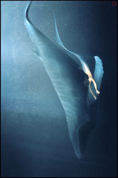 ☆ Whale and Mermaid :¦: By Artist Alexandra Khitrova ☆