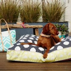 POOCCIO • Luxury lifestyle products for your stylish pooch and their humans  #poocciolife #pooccio #puppy #pooccillo #dogs #love #puppylove #luxurylifestyleproductsfordogs #positive #happy #dogslife #style #design #designeraccessoriesfordogs #dogbed #designeraccessories #designerdogbed #luxurylifestyleproductsfordogs #floorpillows #floorcushions #imvula #poocctote #sezominta