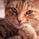 Is Your Cat Safe from Common Poisons? | petMD
