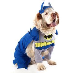 Emmet - as Batman - Halloween 2012 - Clumber Spaniel