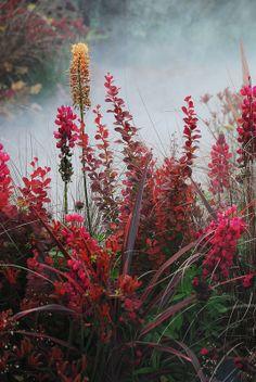 Desolation to Regeneration - Hampton Court Flower Show