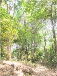みのかも文化の森