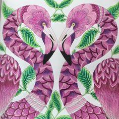Scrapperdee's Ramblings as a SAHM: Colouring - millie marotta tropical wonderland flamingo bird #milliemarotta #tropicalwonderland