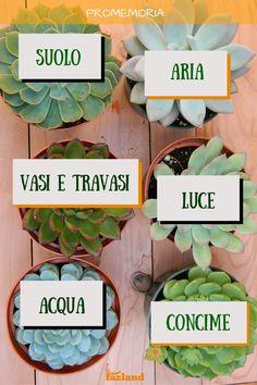 Come curare le #piante #grasse anche in #inverno :) #failacasagiusta #green   https://www.fazland.com/articoli/fai-da-te/cura-delle-piante-grasse-in-8-passi