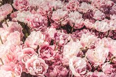 Though flowers can offer a beautiful display in the spring, they are also wonderful additions to your plate! Check out some of our favorite edible flowers. Pink Flower Pictures, Peony Flower Photos, Flower Images, Flower Frame, Flower Petals, Flower Art, Red And White Flowers, Red Flowers, Spring Flowers