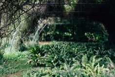 Um einen (kleinen) Urwald zu finden, muss man nicht nach Südamerika gehen - den gibt es auch in Schwäbisch Gmünd ;)