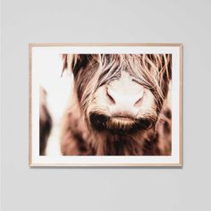 Designstuff offers a range of Scandinavian home decor including this photographic Highland Cow print and frame by Warranbrooke.