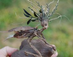 sculpture of wooden roots