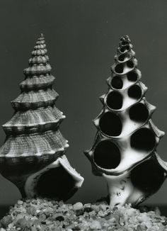 Light in shell and dome: Ansel Adams, Andreas Feininger photography at Berkshire Museum