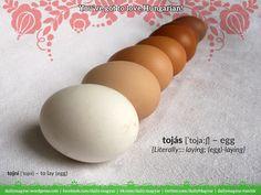 tojás [ˈtojaːʃ] – egg  [Literally::: laying; (egg)-laying]   tojni [ˈtojni] – to lay (egg)  tojik [ˈtojik] – he/she/it is laying (egg)  tojó [ˈtojoː]  1) hen  2) (egg)-layer (person, animal, thing)