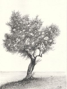 Olive Tree Drawing by aakritiarts on Etsy