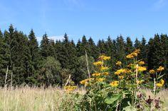 4 Freizeiten: Der HohneHof im Nationalpark Harz *Ausflugstipp*